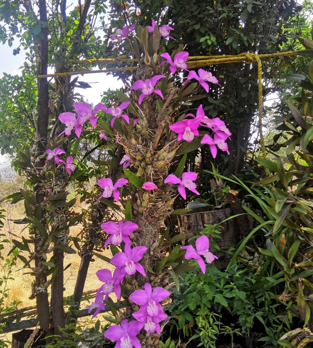Uno de los fenómenos naturales más hermosos de Tlaxcala.