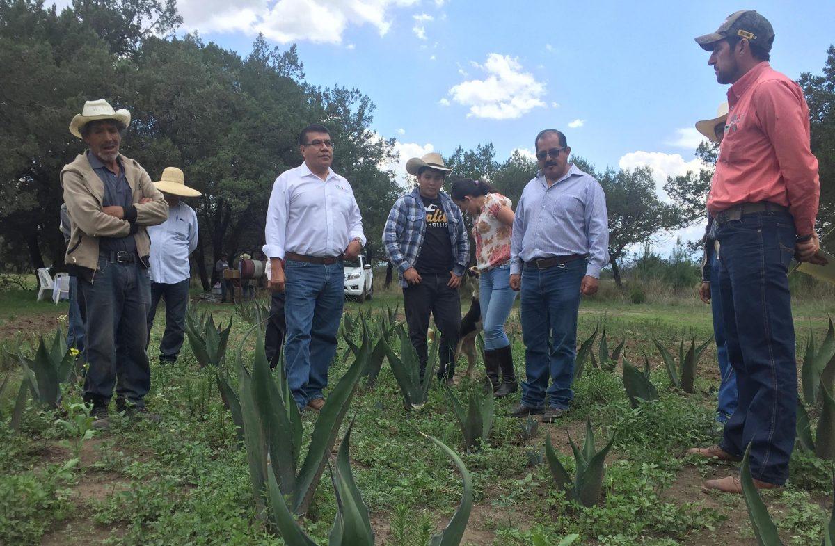 ENTREGA SEFOA MÁS DE 34 MIL PLANTAS DE MAGUEY EN EL ESTADO
